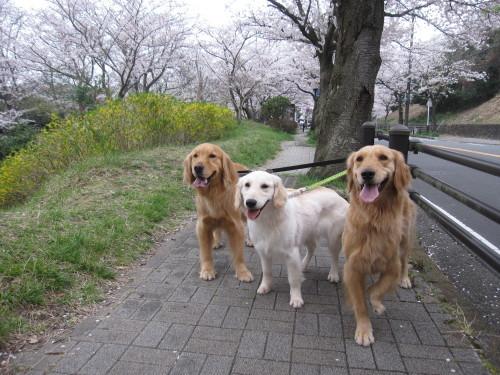 ゴーちゃんとあっちゃんとジョジョさん_e0350927_18260024.jpg