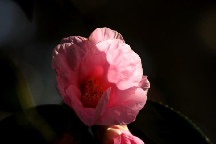 福島市渡利 「花見山の花」 ④_d0106628_18472677.jpg