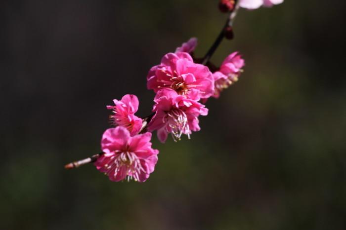 福島市渡利 「花見山の花」 ④_d0106628_18473557.jpg