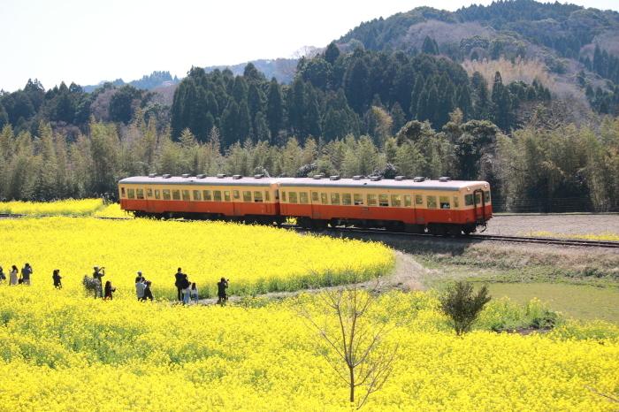 小湊鉄道 part 1_f0348831_07555076.jpg