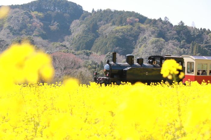 小湊鉄道 part 1_f0348831_07560312.jpg