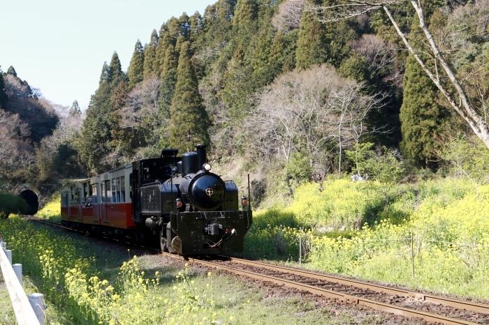 小湊鉄道 part 2_f0348831_07561444.jpg