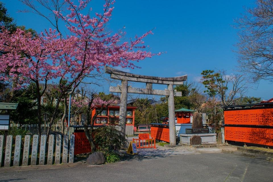 車折神社の河津桜_e0363038_18101924.jpg