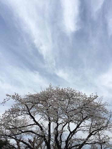 気づいたら、桜だった_c0113755_00235393.jpg