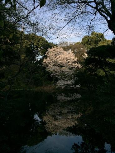 気づいたら、桜だった_c0113755_00242739.jpg