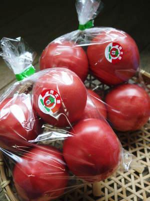 樹上完熟の朝採りトマト 令和2年度の栽培に向け土つくり始めました!今年はキュウリと2本立てです!!_a0254656_16512460.jpg
