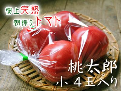 樹上完熟の朝採りトマト 令和2年度の栽培に向け土つくり始めました!今年はキュウリと2本立てです!!_a0254656_16563982.jpg