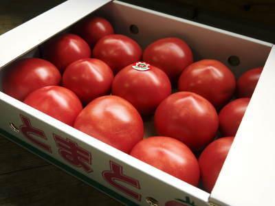 樹上完熟の朝採りトマト 令和2年度の栽培に向け土つくり始めました!今年はキュウリと2本立てです!!_a0254656_17512828.jpg