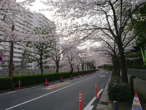 今朝の目黒川の桜_c0100865_08133301.jpg