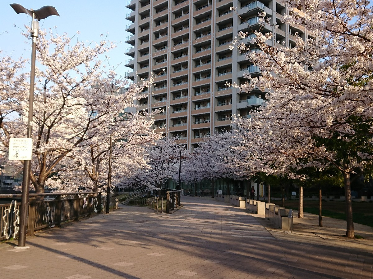 今朝の目黒川の桜_c0100865_08142373.jpg