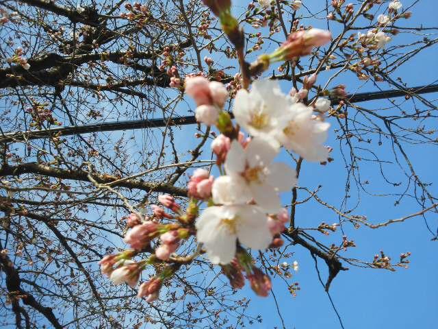 桜が映えます (*^^*) 日生中央駅前から・・・畦野駅前から・・・とっても良いお天気🌞_f0061067_20572113.jpg