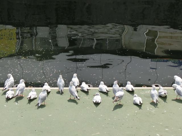 秋葉原の渡り鳥?たち_f0189467_23344565.jpg