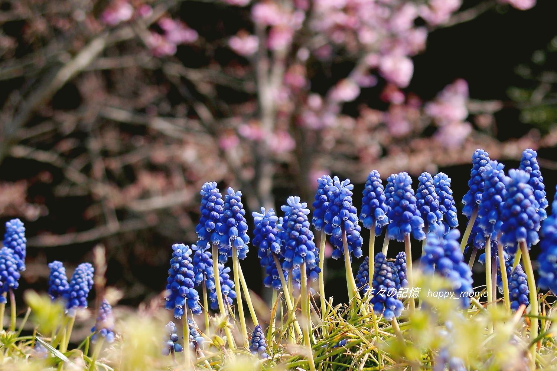 ムスカリの咲く道_c0357781_17273103.jpg