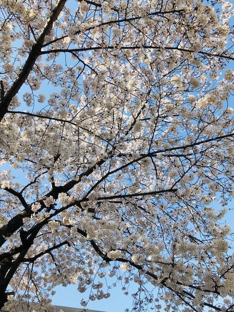 春~🌸_f0204295_16132953.jpg