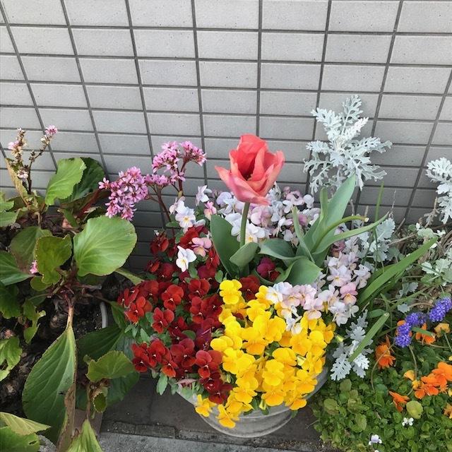 春~🌸_f0204295_16193616.jpg