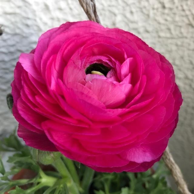 春~🌸_f0204295_16210143.jpg