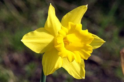 春の黄色い花_b0145296_16051554.jpg
