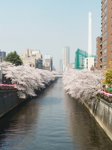 目黒川のお花見便り🌸_a0114206_20314883.jpg