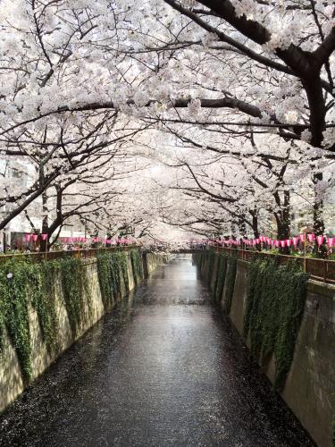 目黒川のお花見便り🌸_a0114206_20344890.jpg