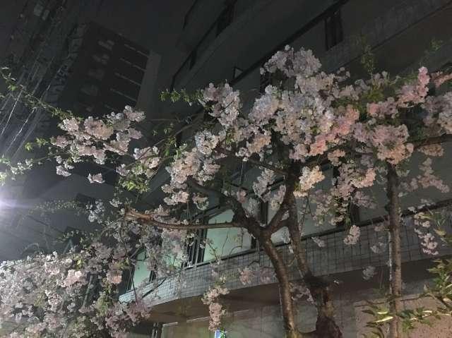 今年の花見_a0246407_17432915.jpg