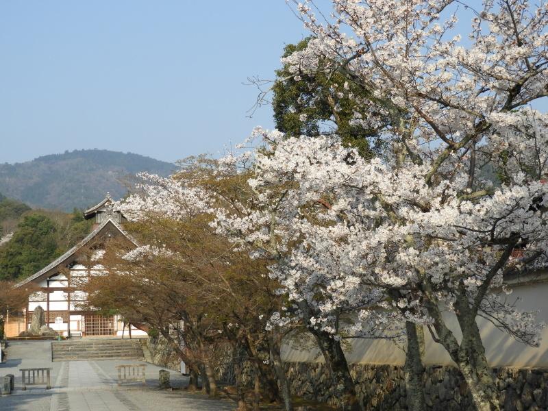 嵐山と天龍寺_e0048413_17222909.jpg