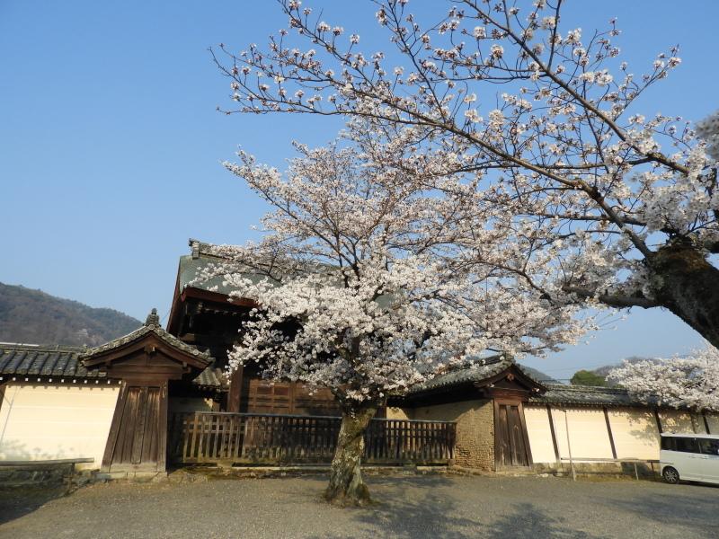 嵐山と天龍寺_e0048413_17224144.jpg
