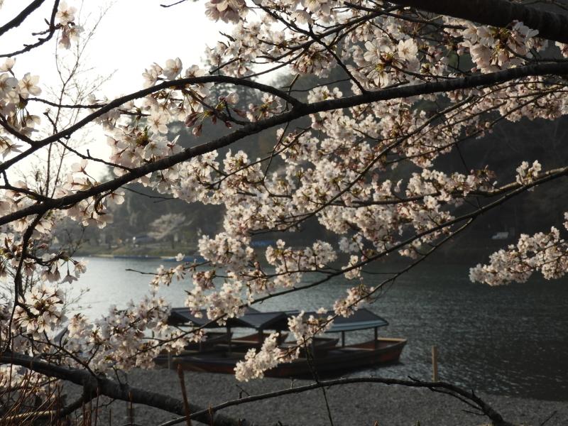 嵐山と天龍寺_e0048413_17225866.jpg