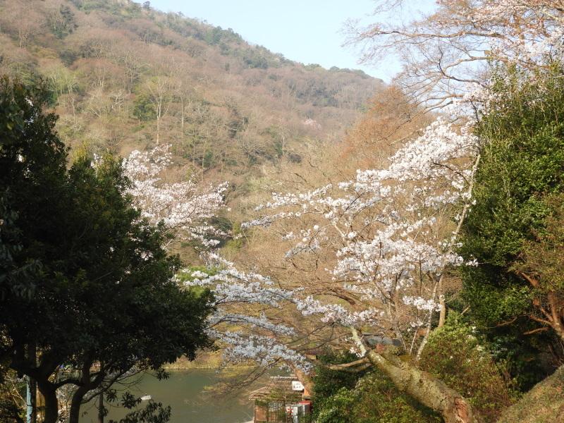 嵐山と天龍寺_e0048413_17231998.jpg