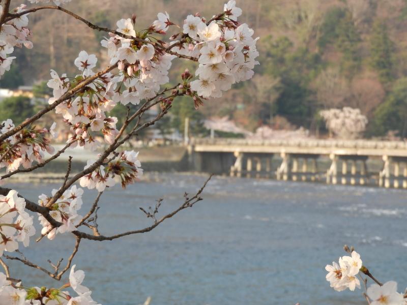 嵐山と天龍寺_e0048413_17233674.jpg