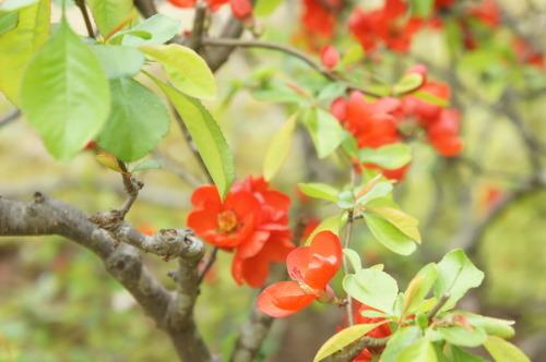 【桜の花が見頃です♪】_f0215714_16421160.jpg