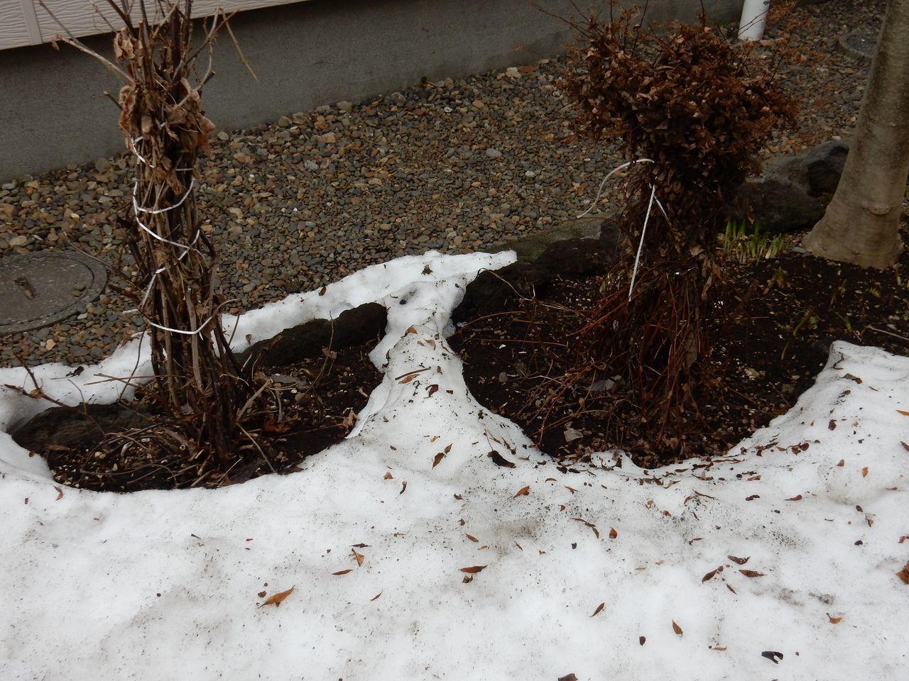 3月中に雪が消える勢い_c0025115_21245340.jpg