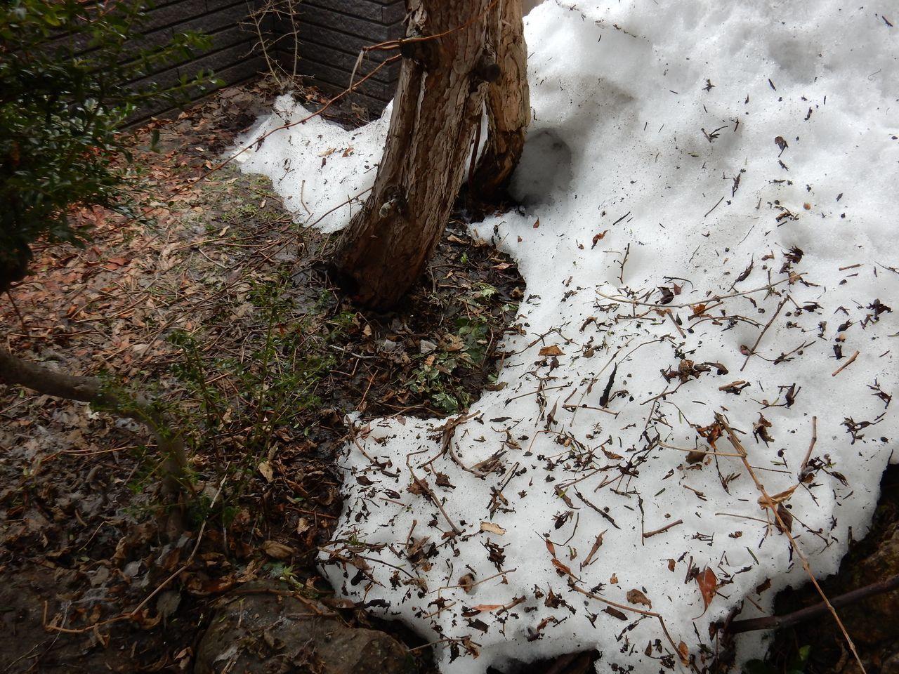 3月中に雪が消える勢い_c0025115_21245559.jpg