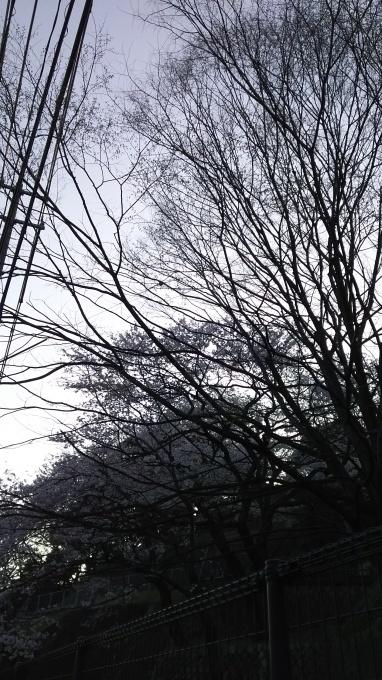 本日は、最低気温が9℃_e0094315_07194878.jpg