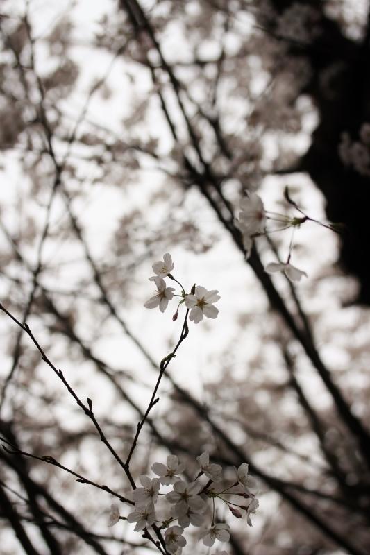 喜楽亭で楽しむ おいしい日本茶 3月_b0220318_10293767.jpg