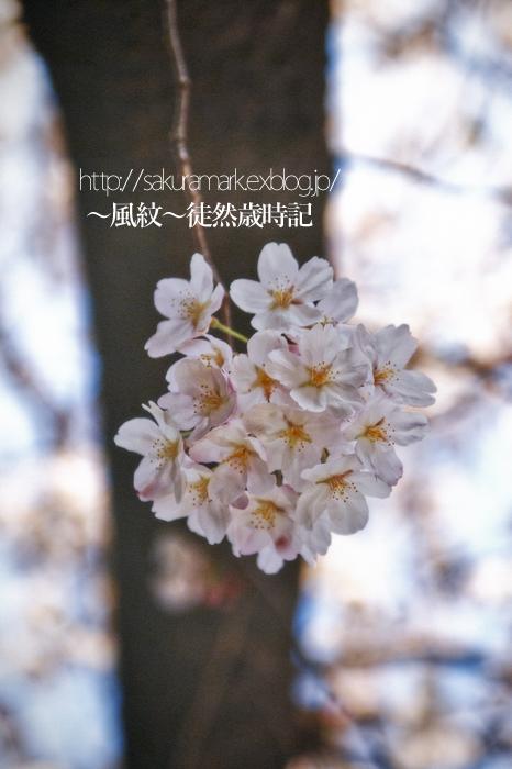 f0235723_19255219.jpg