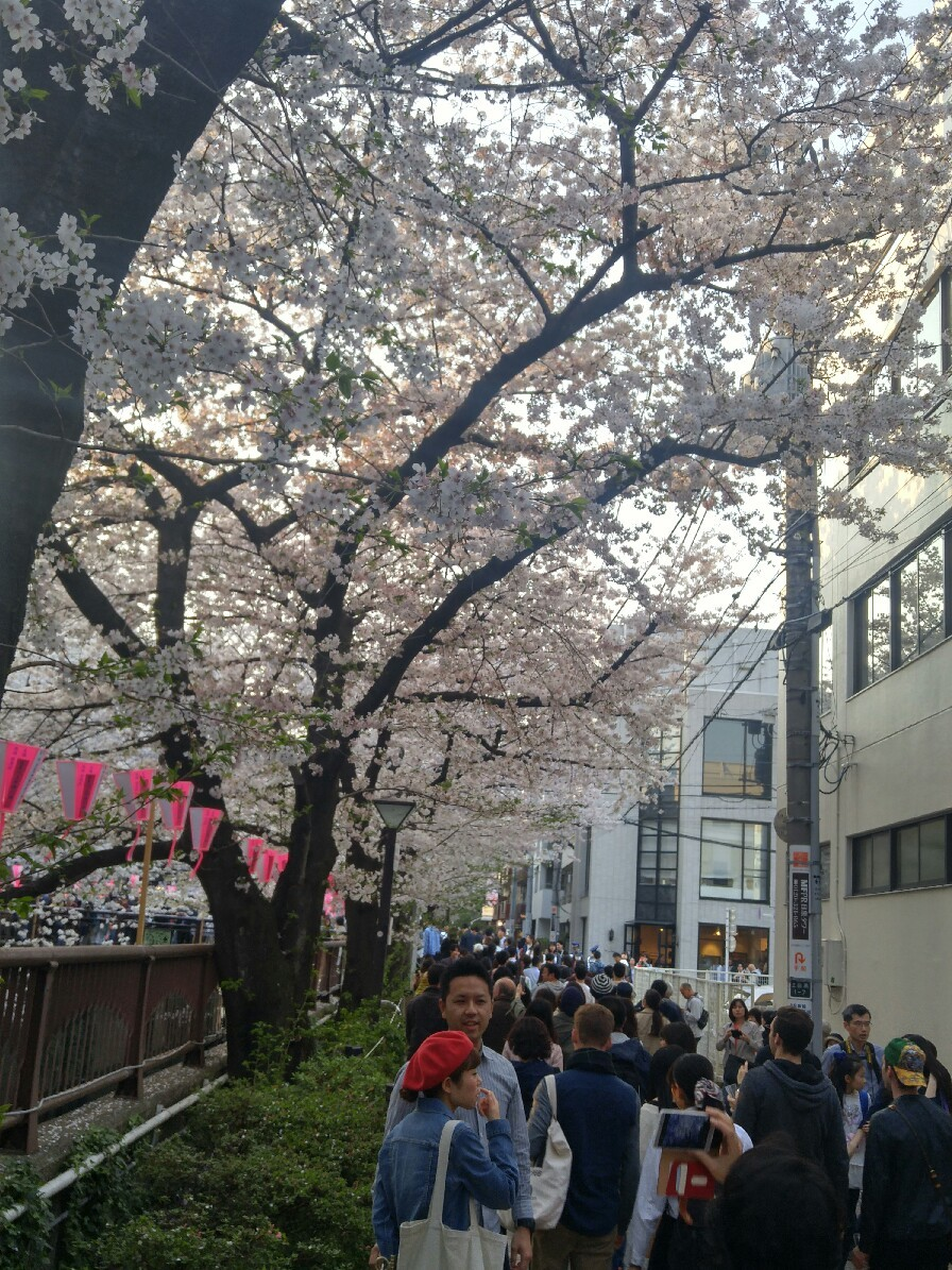 目黒川の桜_c0124528_19314449.jpg