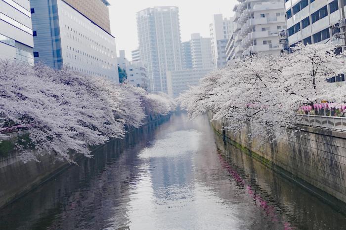 東京都目黒区 「大都会の桜」_d0106628_11474423.jpg