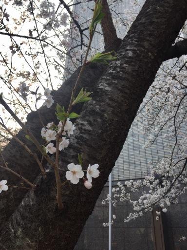 春爛漫の京都_c0223630_13041156.jpg