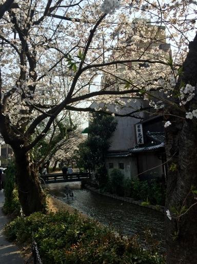 春爛漫の京都_c0223630_13121922.jpg