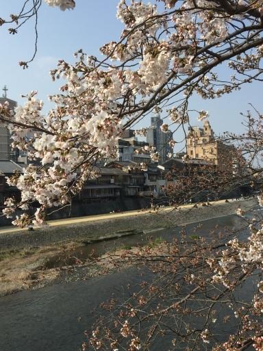 春爛漫の京都_c0223630_13165862.jpg