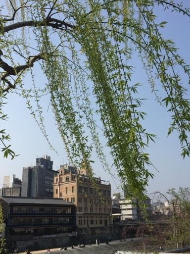 春爛漫の京都_c0223630_13183578.jpg