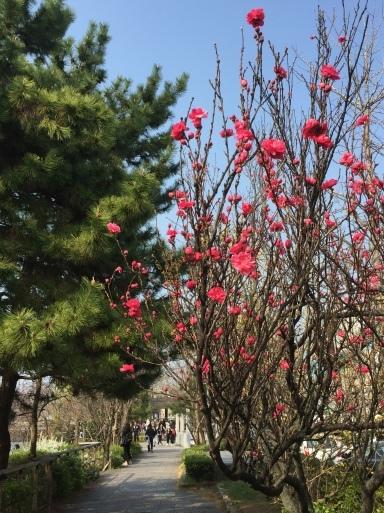 春爛漫の京都_c0223630_13200332.jpg