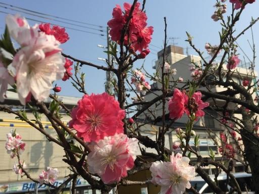 春爛漫の京都_c0223630_13210343.jpg