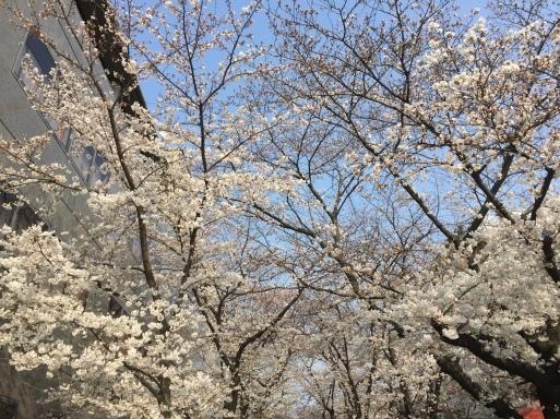 春爛漫の京都_c0223630_13235641.jpg
