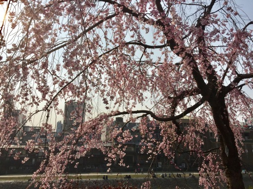 春爛漫の京都_c0223630_13323540.jpg