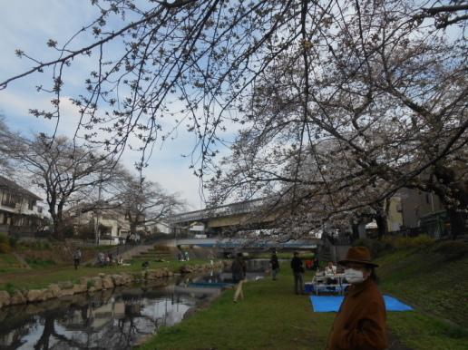 大変!桜が咲いてしまう〜〜。大忙しののび丸誕生日。_a0095931_10222003.jpg
