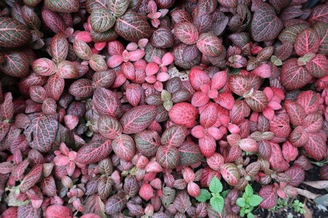 チョコレートの木 (1)_f0380234_02351739.jpg