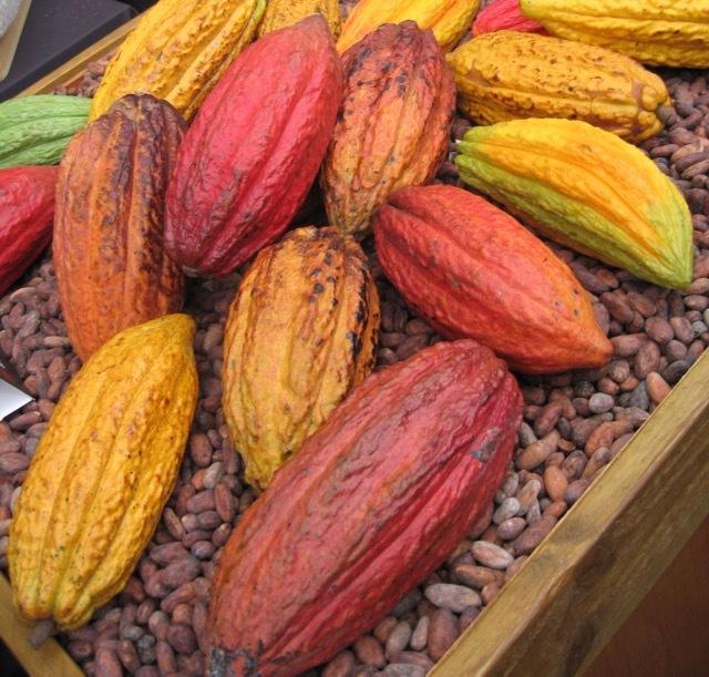 チョコレートの木 (1)_f0380234_02354466.jpg