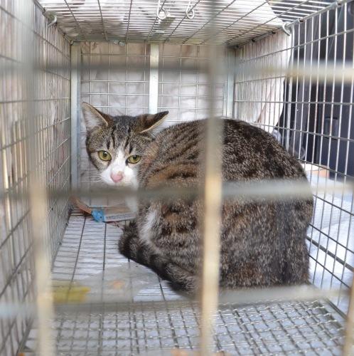 産まれても捨てられる、捨て猫は犯罪です、犯罪のないイトシマにしよう。_d0073743_22193292.jpg