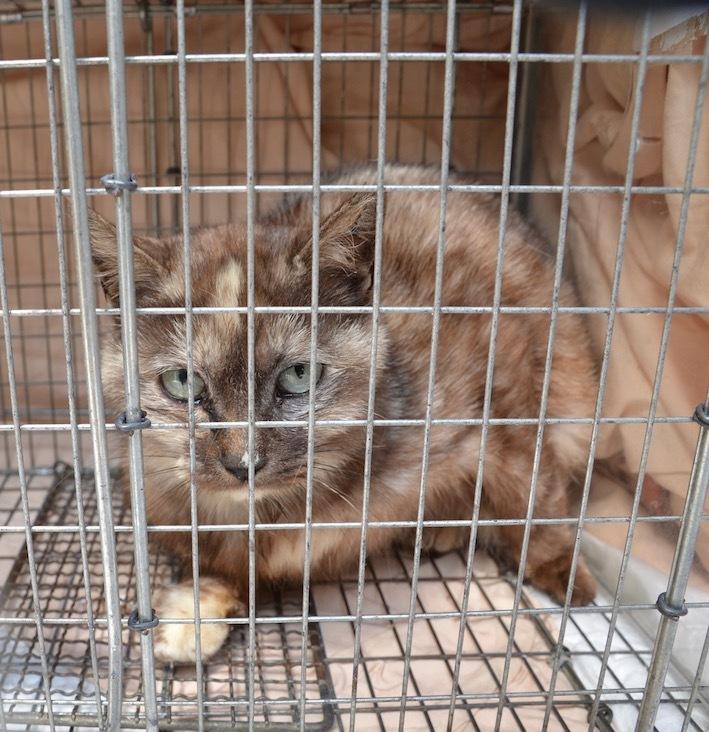 産まれても捨てられる、捨て猫は犯罪です、犯罪のないイトシマにしよう。_d0073743_22195620.jpg